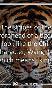 64 Magnificent Tiger Facts | Fun Facts about Tigers ...