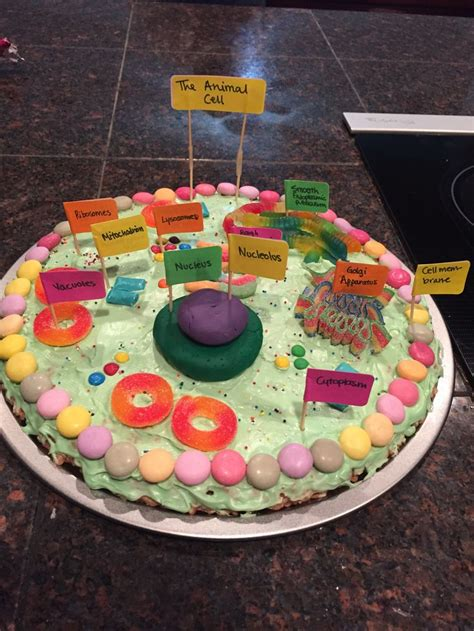 animal cell project edible project ideas pinterest