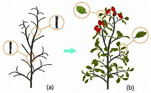 Sualization Of A Virtual Cherry Tomato Plant Demonstrated