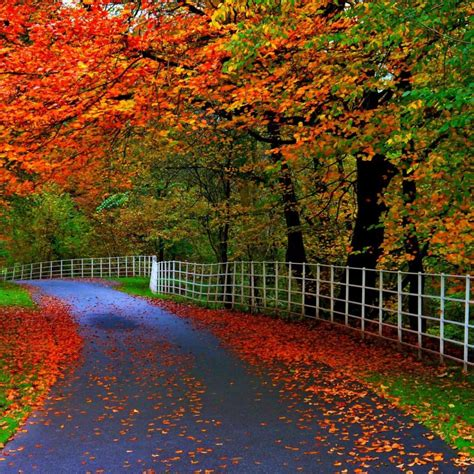 Autumn Leaves On The Road Hd Wallpaper
