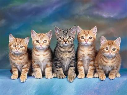 Cats Wallpapers Cat Kittens Pretty Kitten Wall