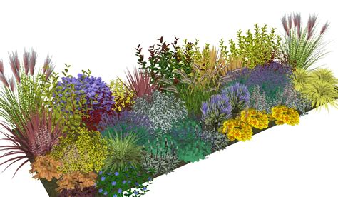 evergreen shrubs for borders simply borders plants plans in the post