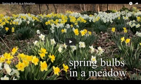 where to plant fall bulbs there s always room for more