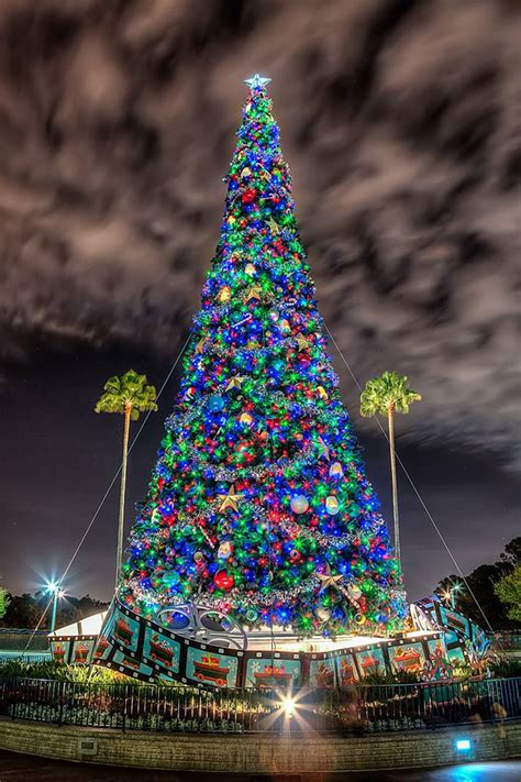 christmas tree lighting events near me palooza 2014 dad and his crazy disney friends