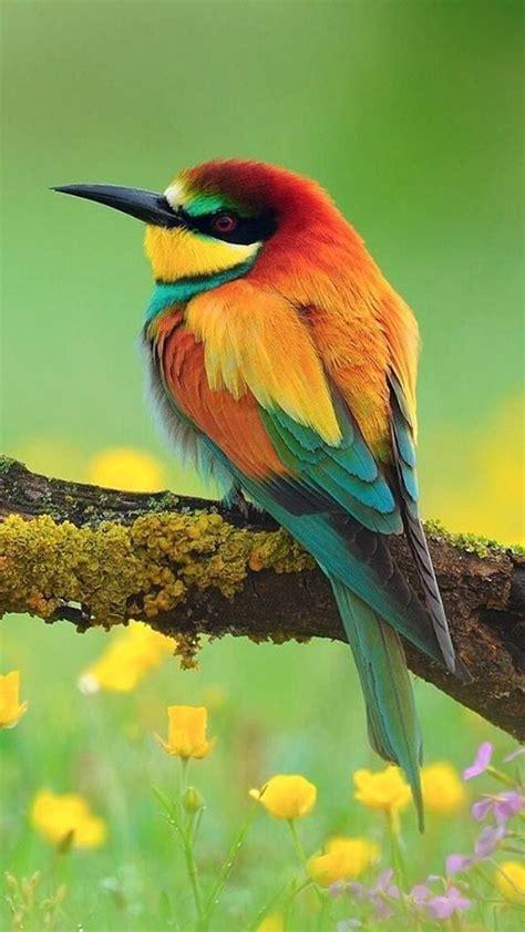 Jenis burung langka di malang fakta mengejutkan ini diketahui setelah profauna… Gambar Burung Langka Dan Unik - Gambar Burung