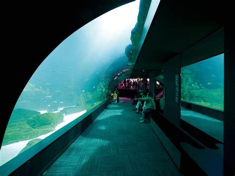 aquarium of cineaqua stouring in