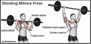 It Is Important To Build Up The Shoulder Muscles As Your Upper Body Just Isn U2019t Complete Without