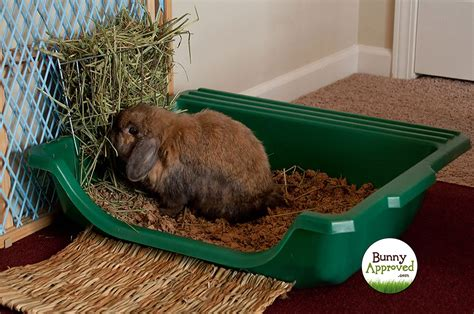 litter box up for rabbits what are the choices bunny approved house rabbit toys
