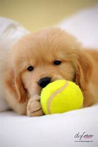 132 best Dog toys for Golden retrievers images on ...