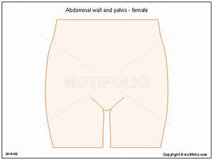 Abdominal Wall And Pelvis