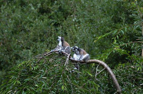 le parc zoologique du ch 226 teau de la bourbansais g 238 te de la b 233 zardais