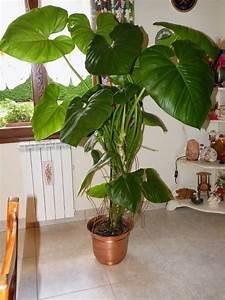 Grande Plante Verte : du four au jardin et mes dix doigts plante verte ~ Premium-room.com Idées de Décoration