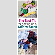 Best Tip For Getting Rid Of Mildew Smell  The Taylor House