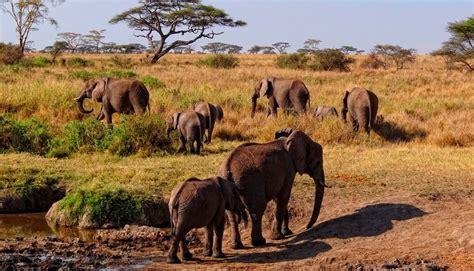 si鑒e habitat hábitat de los elefantes