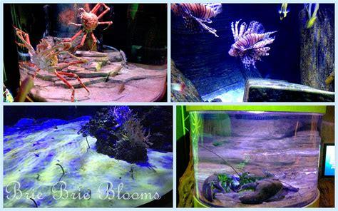 legoland 174 california resort sea aquarium brie brie blooms