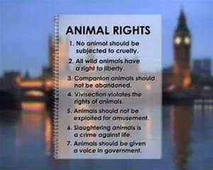 Animal Rights  U2013 An Intro