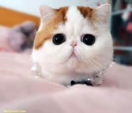 snoopy cat snoopy the cat pictures so adorable sharesloth