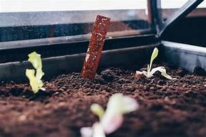 Paprika Pflanzen Abstand : hochbeet tipps anlegen bepflanzen und leckeres gem se ernten ~ Whattoseeinmadrid.com Haus und Dekorationen