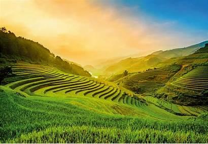 Rice Vietnam Field Terraced Wallpapers Wall Murals
