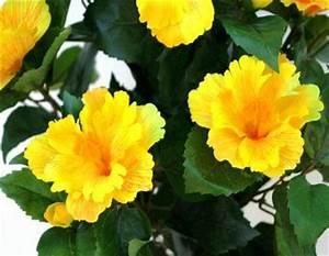 Palmier Artificiel Gifi : fleurs artificielles pour exterieur la pilounette ~ Teatrodelosmanantiales.com Idées de Décoration