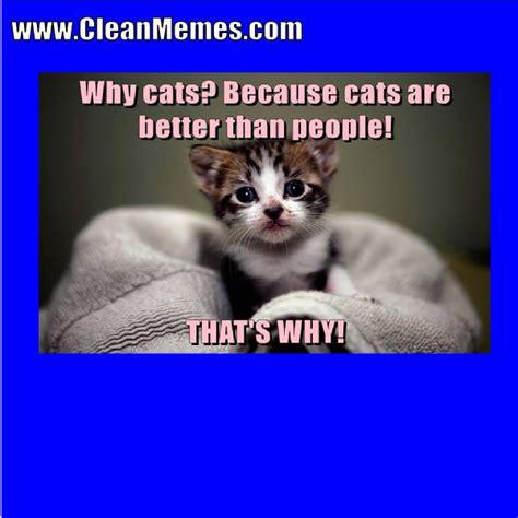 Cat Memes Warrior Clean