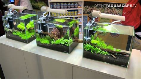 Aquascape Designs For Aquariums by Aquascaping Aquarium Ideas From Aquatics Live 2011 Part