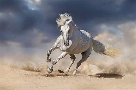 horse andalusian desert dramatic similar against run