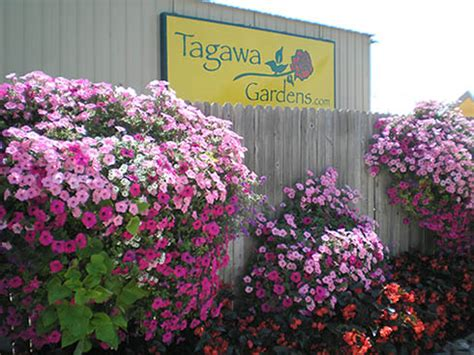 tagawa gardens hours tagawa gardens nursery garden center map hours
