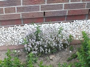Alte Rosensorten Stark Duftend : echter thymian quendel thymus vulgaris baumschule ~ Michelbontemps.com Haus und Dekorationen