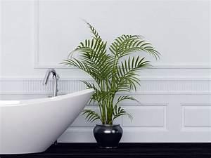 Zimmerpflanze Für Badezimmer : zimmerpflanzen pflege und m glichkeiten ~ Sanjose-hotels-ca.com Haus und Dekorationen