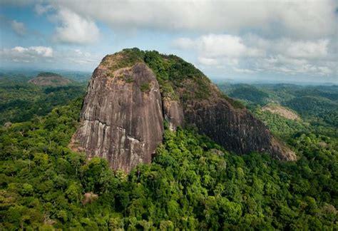 chambre d hotes dans les arbres parc national parc amazonien de guyane