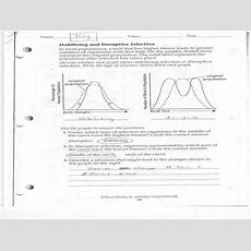 Natural Selection Worksheet Homeschooldressagecom