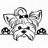 Peeking Terrier Svg Dog Yorkie Clipart Yahoo Pet Silhouette Animals Yorkshire Cricut Coloring Rock sketch template