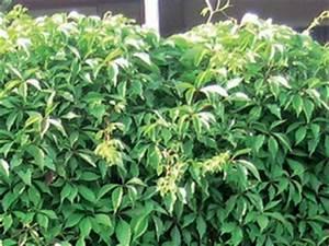 Mur Anti Bruit Végétal : mur anti bruit v g talisable planta de kholhauer ~ Melissatoandfro.com Idées de Décoration