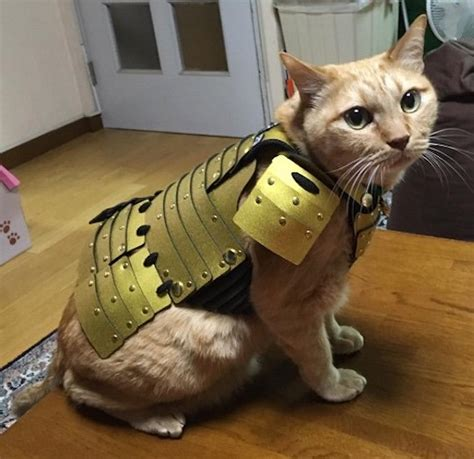 samurai pet armor  cats  dogs japan trend shop