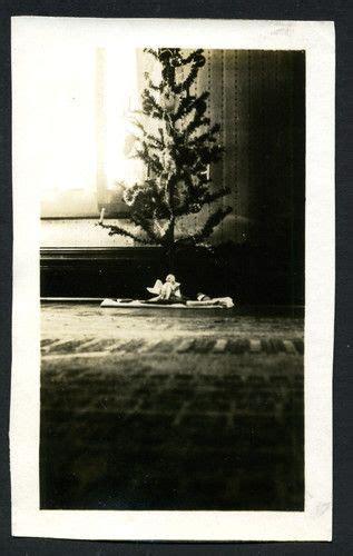 solitary gift beneath scrawny yet gorgeous tree