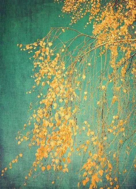 whispers  yellow  ingrid beddoes  canvas print buy