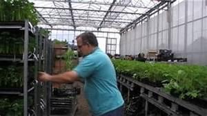 Wann Himbeeren Pflanzen : pointilla fortunella ~ Lizthompson.info Haus und Dekorationen