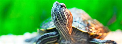 Turtle & Tortoise Food: What to Feed Your Pet | PetSmart