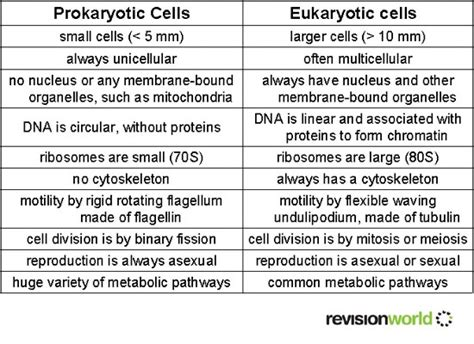 cells revision world
