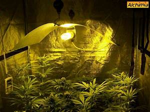 culture interieur de cannabis blog du growshop alchimia With chambre de culture cannabis interieur