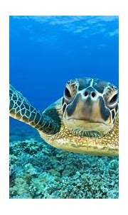 Huge Turtle Hd Wallpapers | Wallpapers Box