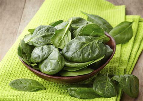 come coltivare le in vaso come coltivare gli spinaci non sprecare