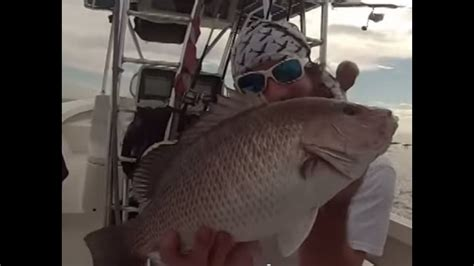 snapper goliath grouper fishing catch handline