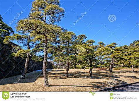 Japanischer Garten Kiefer by Bildergebnis F 252 R Kiefer Garten Pflanzen