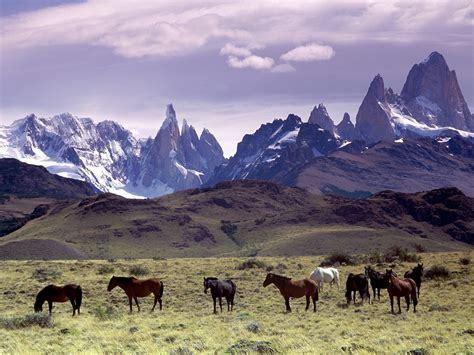 wild horses animals wallpapers argentina mountains andes dreams horse animal mountain dream mustangs bing antelope oryx deer ponies herd