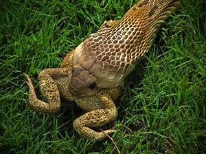 Snakes: Snakes Eating