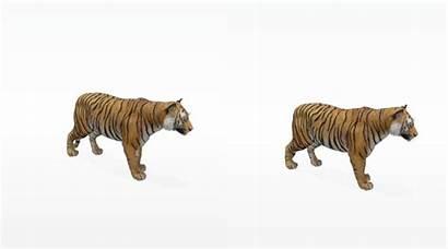 Tiger Google Lion Space Panda Giant Feature