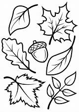 Coloring Fall Leaves Leaf Pages Printable Sheets Template Autumn Adult Adults Vorlagen Schablone Printables Tier Herbst Autum Templates Fensterbilder Sheet sketch template