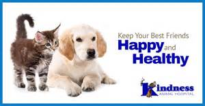 kindness animal hospital the importance of wellness exams for pets in cape coral